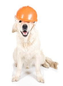 Dog wearing workman hat
